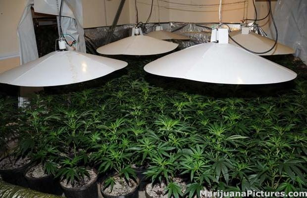 Sophisticated indoor marijuana