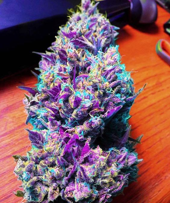 colorful marijuana buds