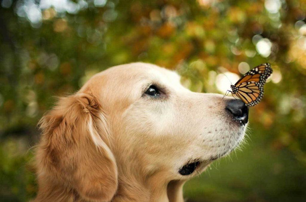 benefits cbd dog
