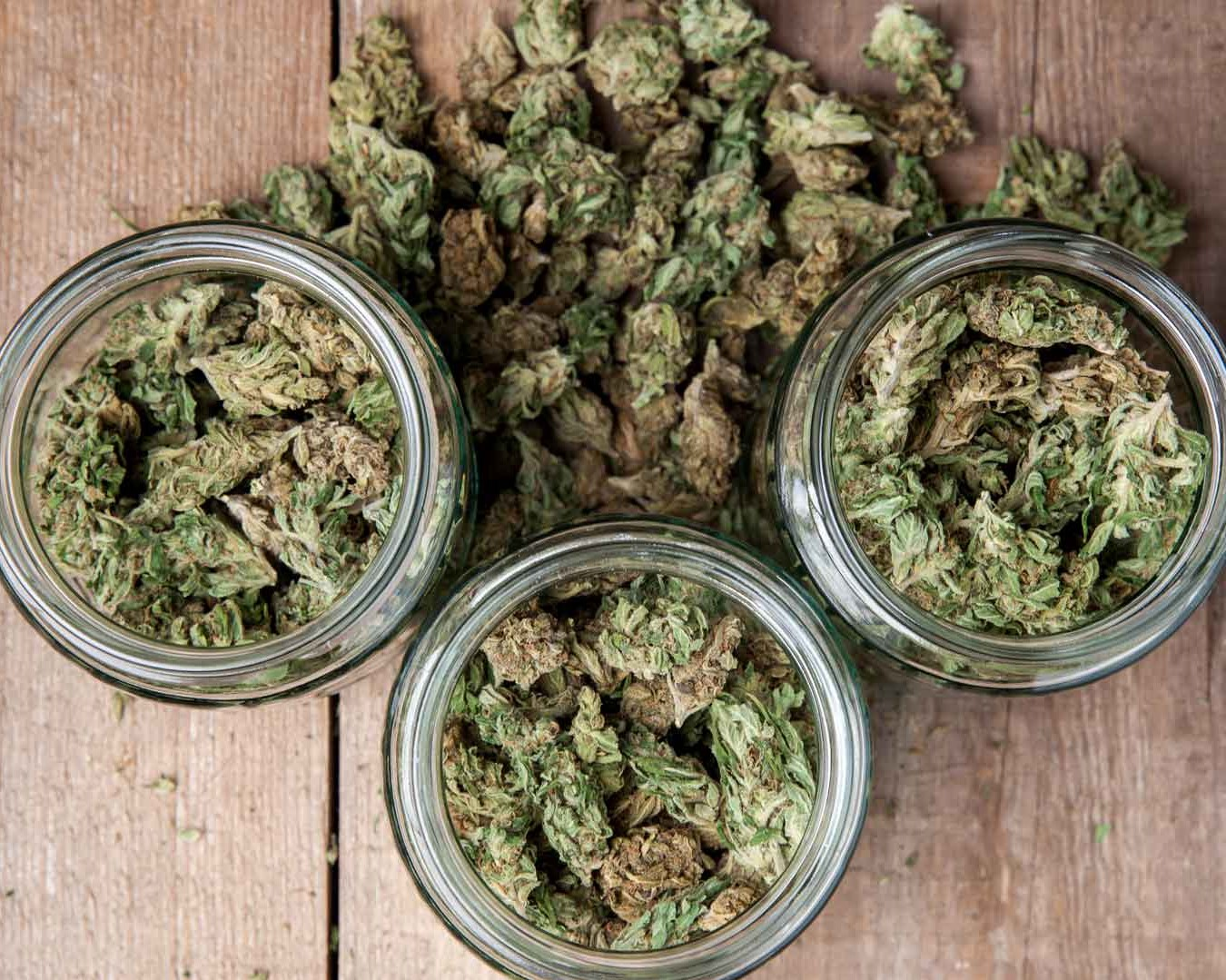 Marijuana Bud Quality