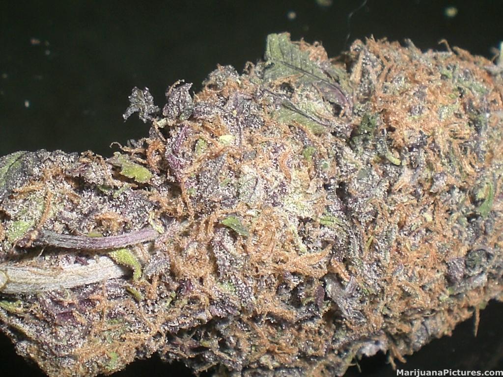 Purple Crack